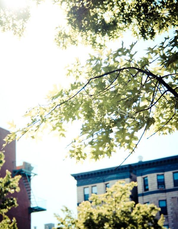 303/365  Sunny Day thumbnail