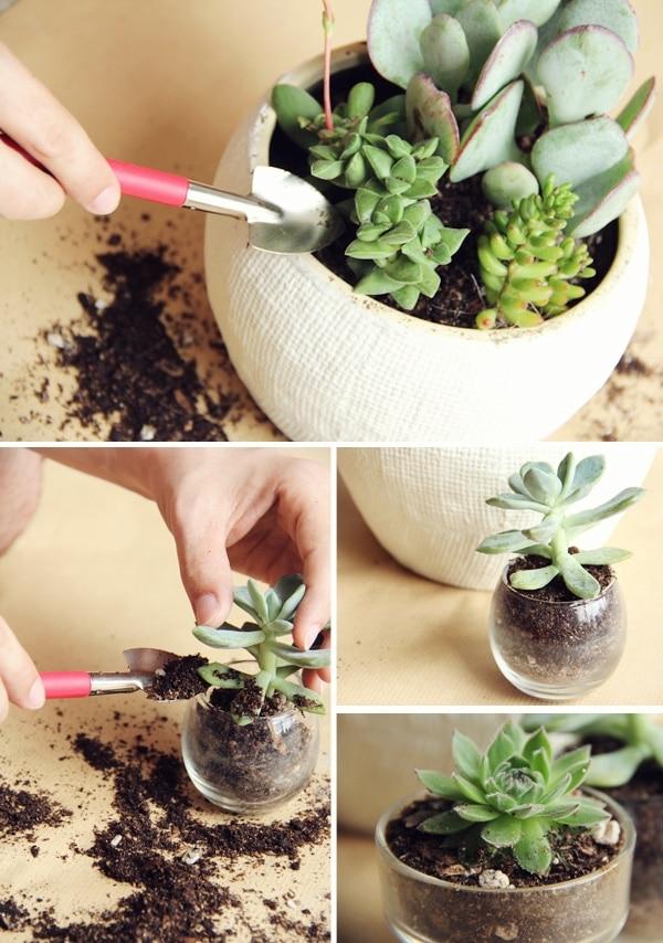 DIY Potted Succulents