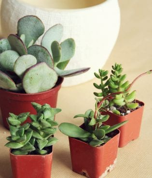 diy potted succulents thumbnail