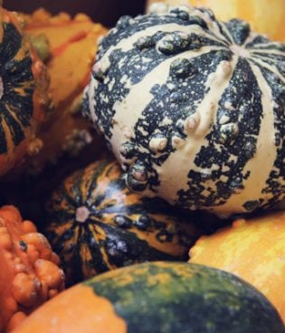 out & about // pumpkin patch thumbnail