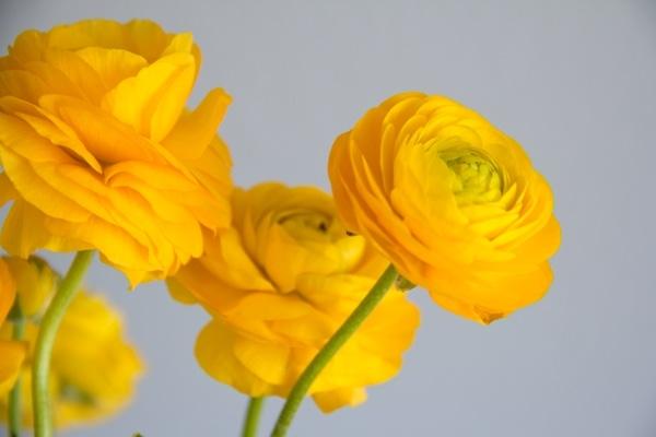 DIY Simple Monochromatic Bouquet
