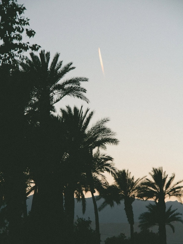 Travel // Palm Desert