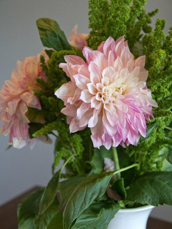dahila-bouquet1