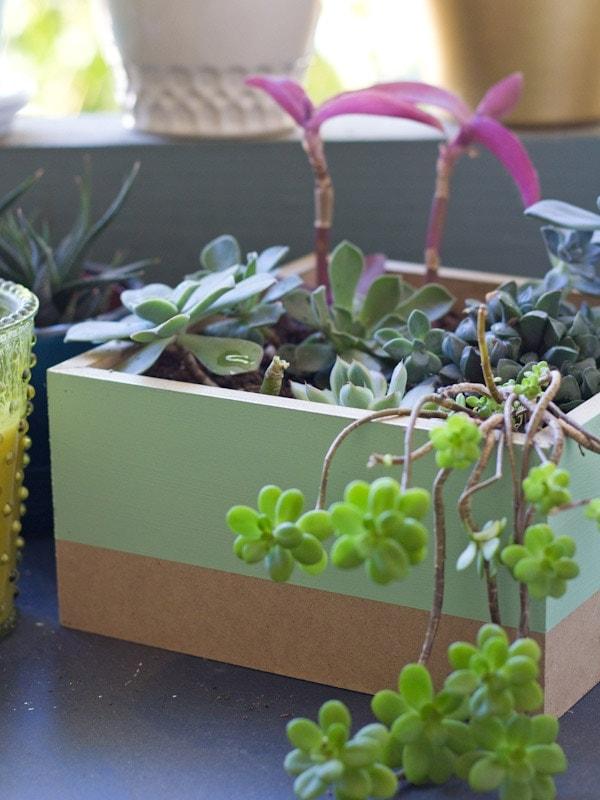 planter6