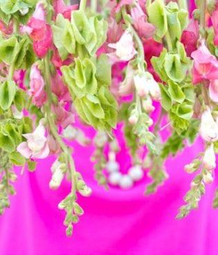 Lovely Links thumbnail