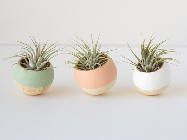Decorating with Air Plants // The Twisted Horn