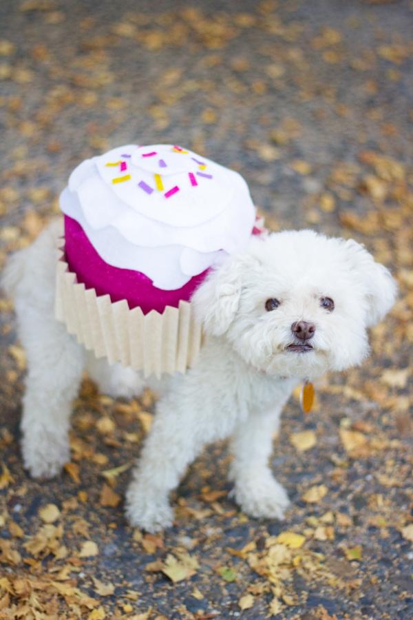 DIY Dog Cupcake Halloween Costume