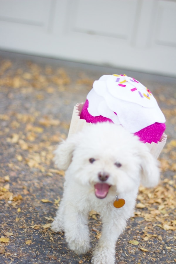 DIY Dog Cupcake Halloween Costume