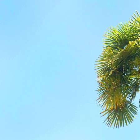 Blue Sky Palm Tree