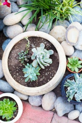 Succulents in pots with river rock