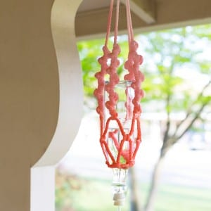 DIY Macrame Hummingbird Feeder thumbnail