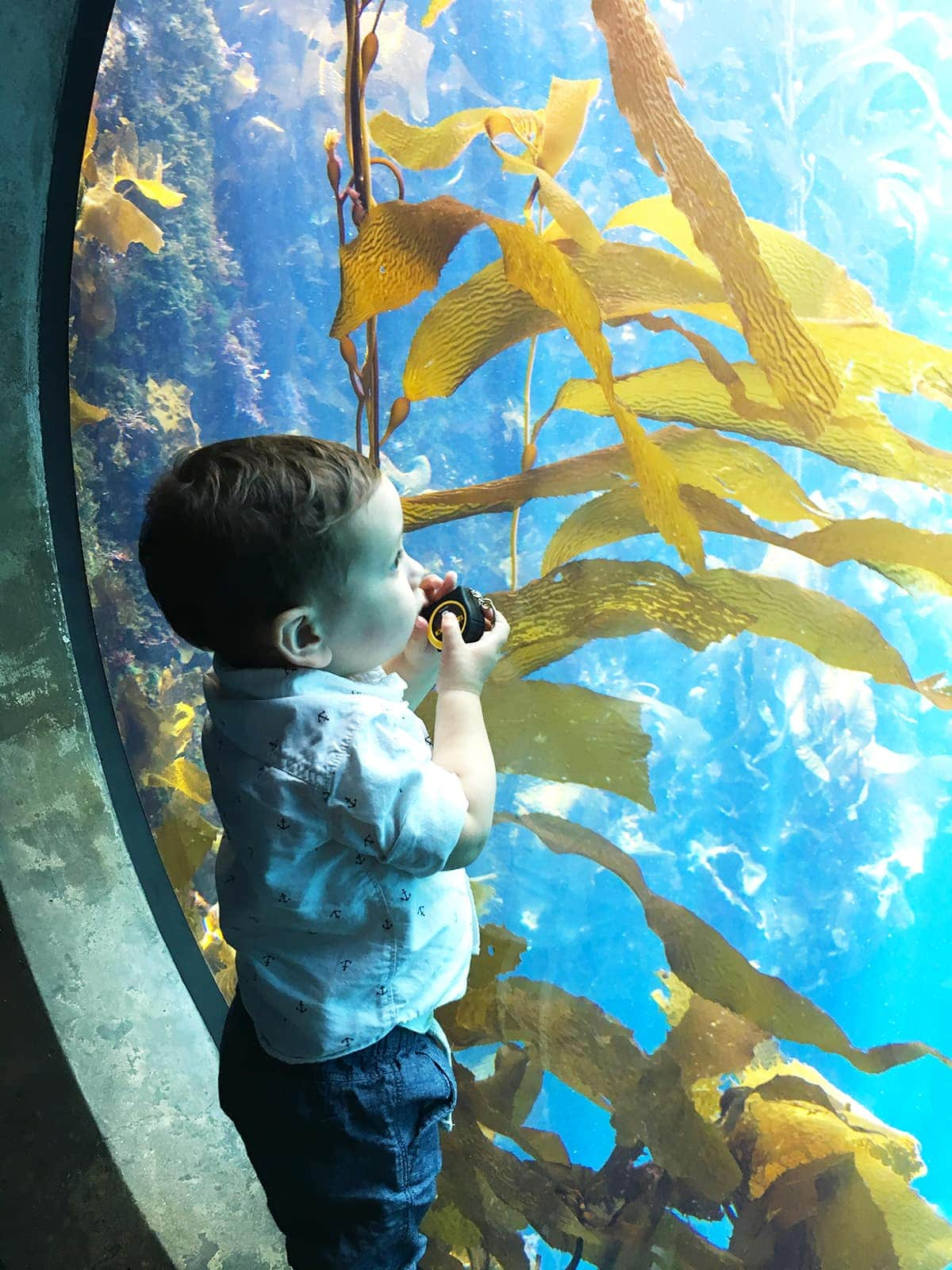 Little Boy in Aquarium