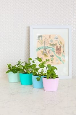 DIY Upcycled Indoor Herb Garden