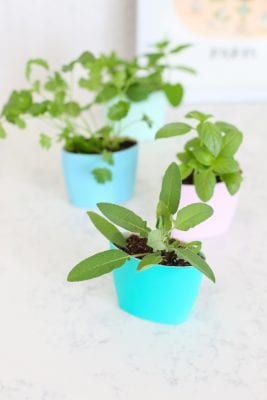 DIY Upcycled Indoor Herb Garden