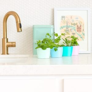 DIY Upcycled Indoor Herb Garden thumbnail