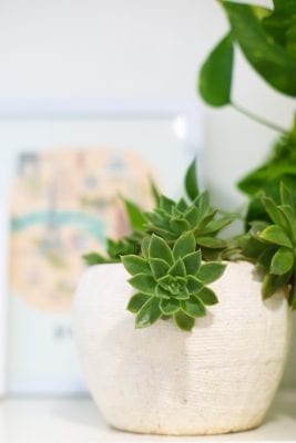 5 Steps to Happy Houseplants