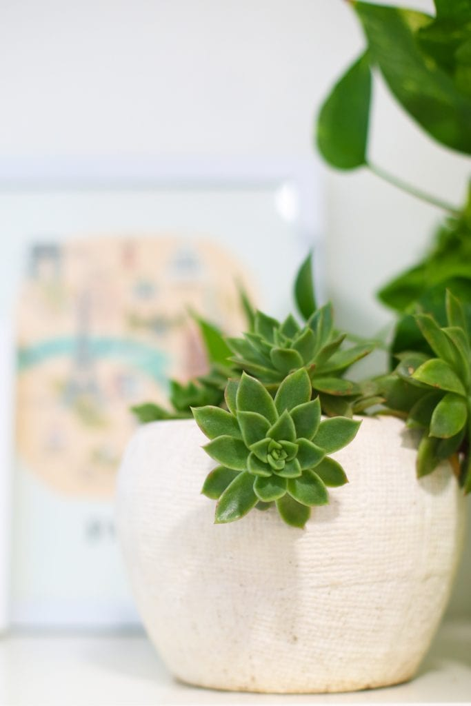 5 Steps to Happy Houseplants