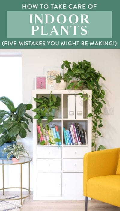 how to take care of indoor plants