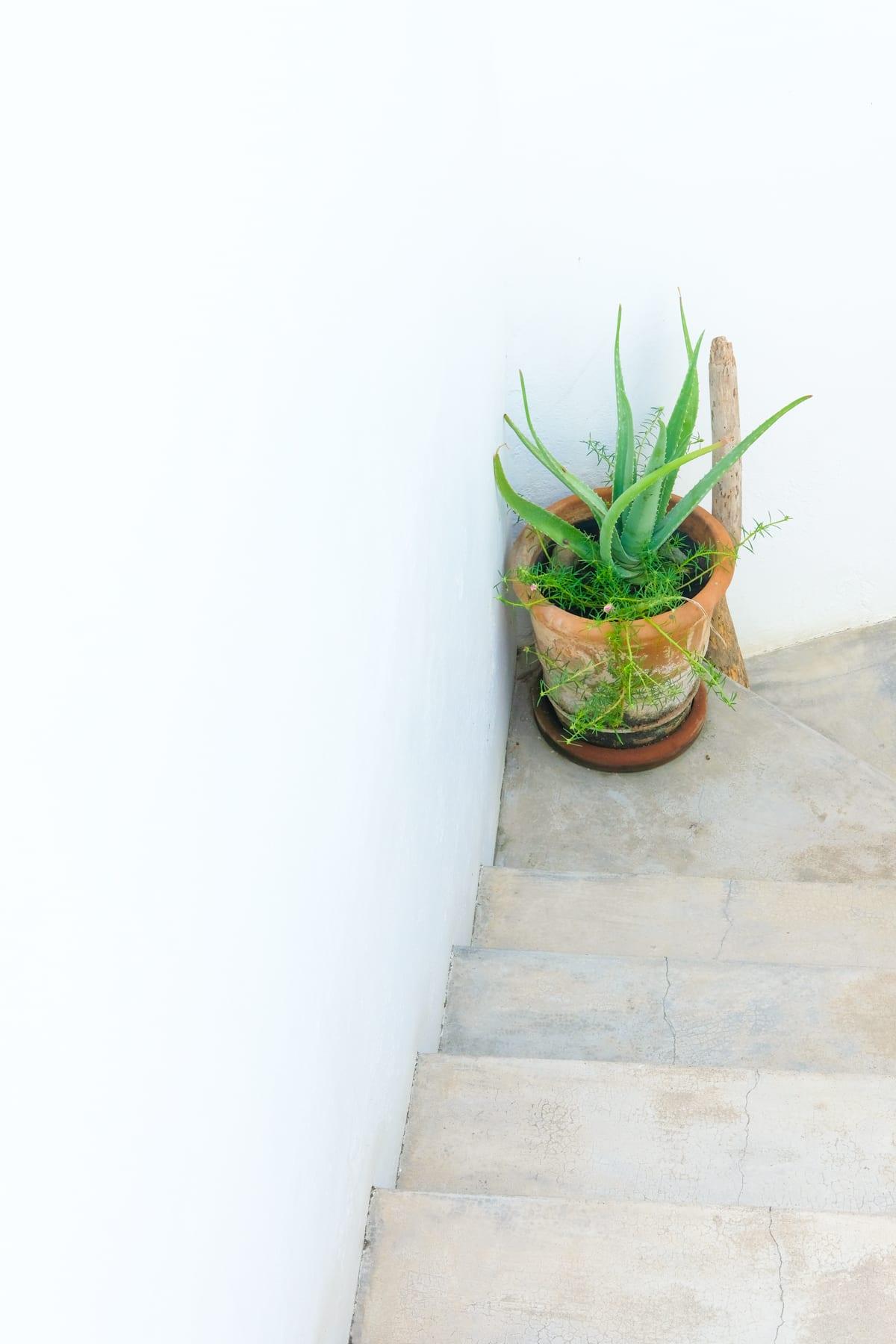 Sayulita Succulent