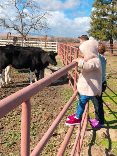 Little girl climbing a pasture fence
