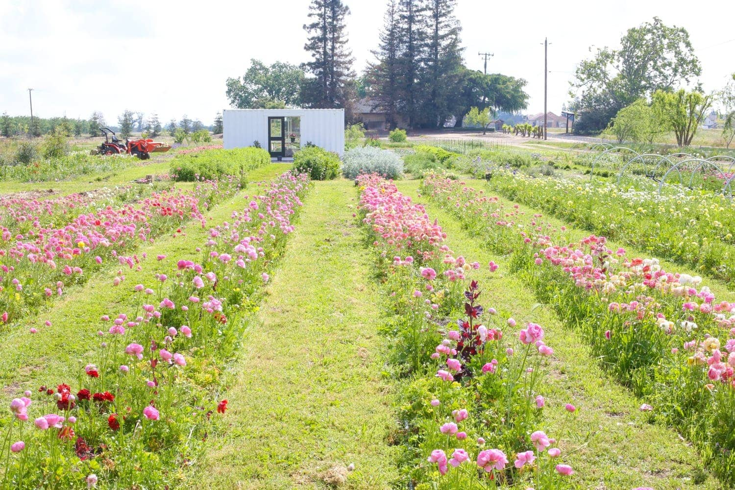 wild blooms flower farm