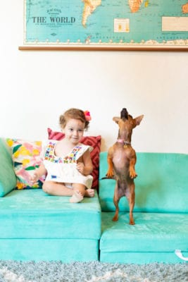 tips for a new family dog