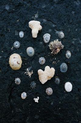 Found beach shells in Kauai