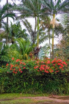 Kauai garden