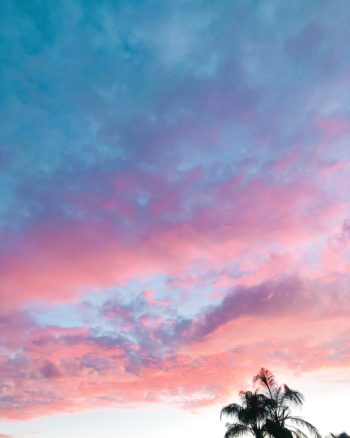 palm tree with pink skies