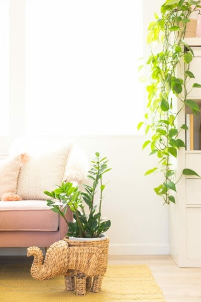 Twelve Low Light Indoor Plants you probably can't kill