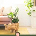 low light indoor houseplants
