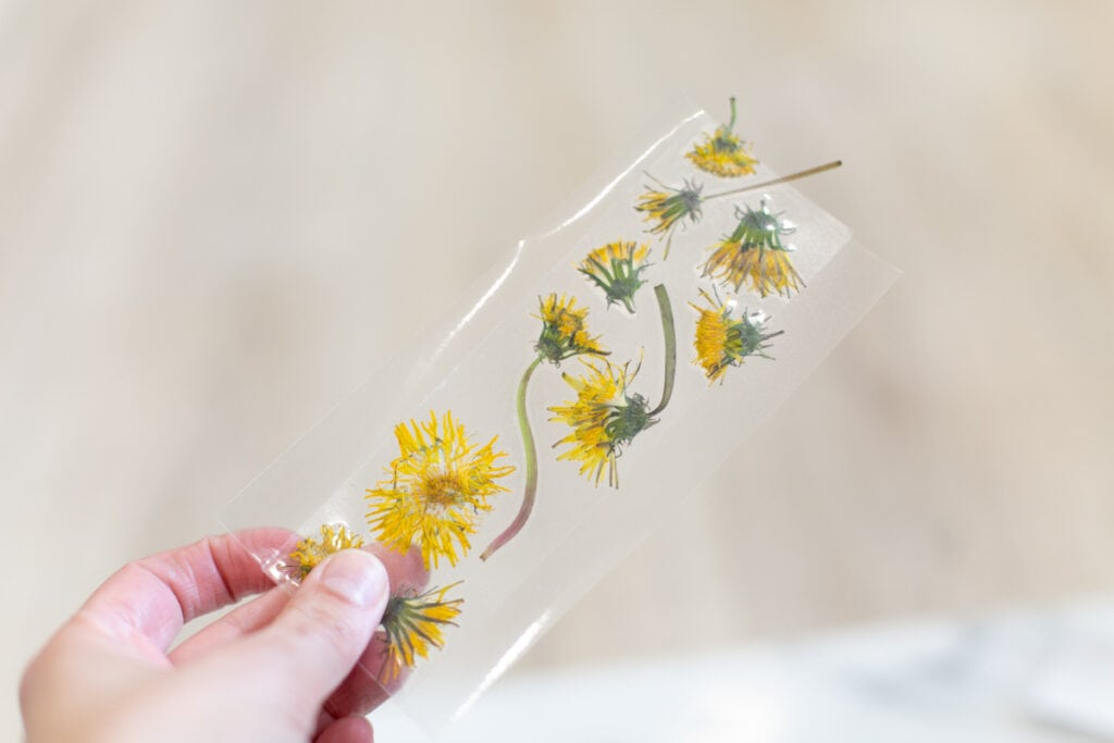 pressed flowers and contact paper