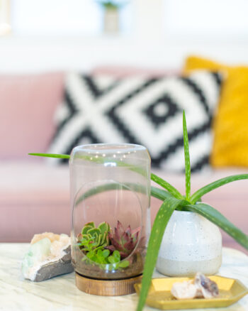 empty peanut butter jar terrarium