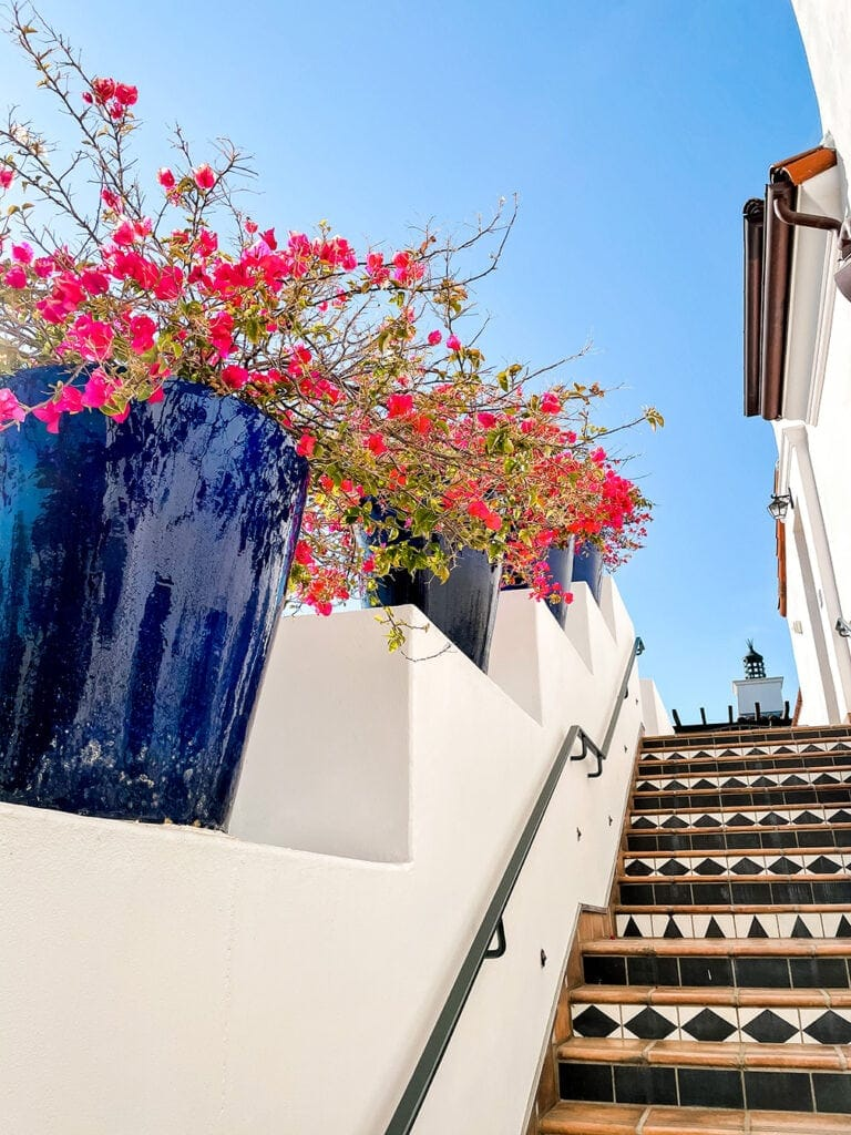 bougainvillea in blue pots on a tile staircase
