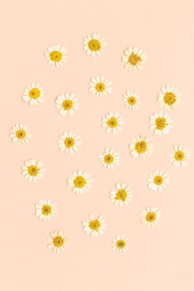pressed flowers on a pink background